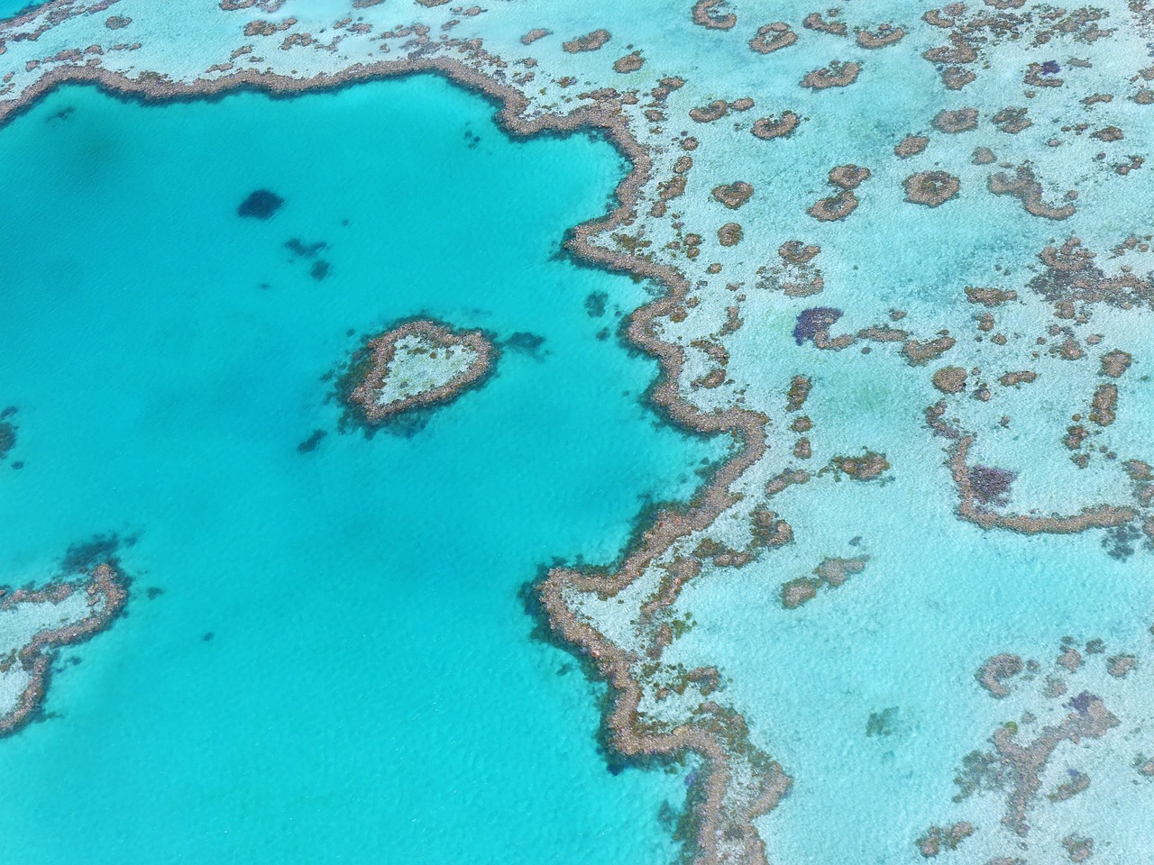 Barrier-Reef-it-up